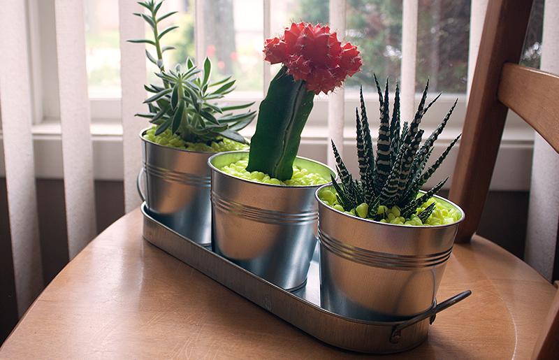 DIY: Neon Rock Plants