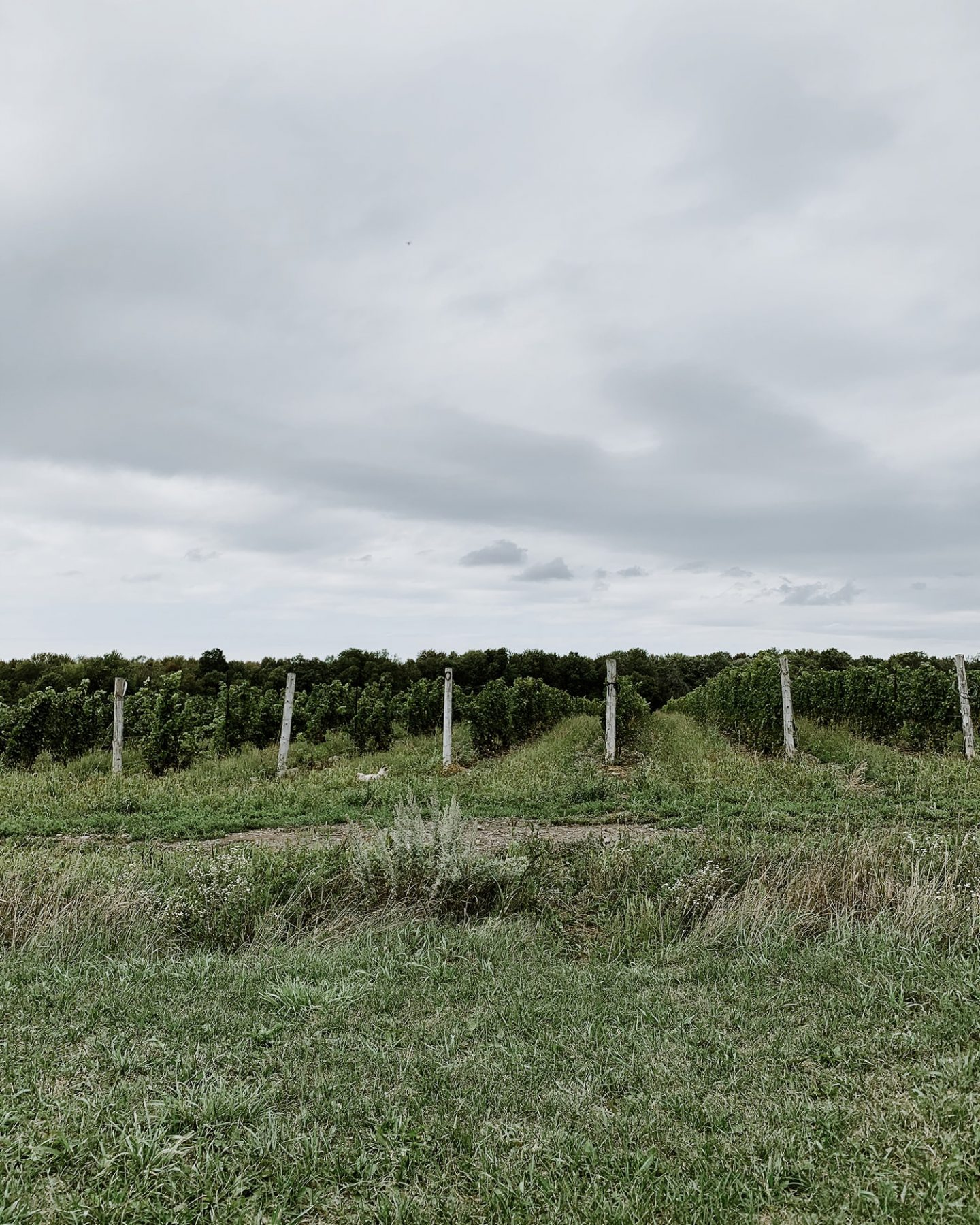 Hinterland Wine Company vineyards in Prince Edward County